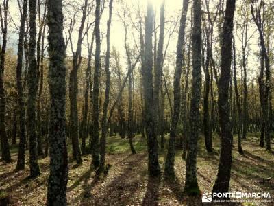 Bosque de Finlandia - Valle de El Paular;mapa senderismo baston senderismo ocio y aventura